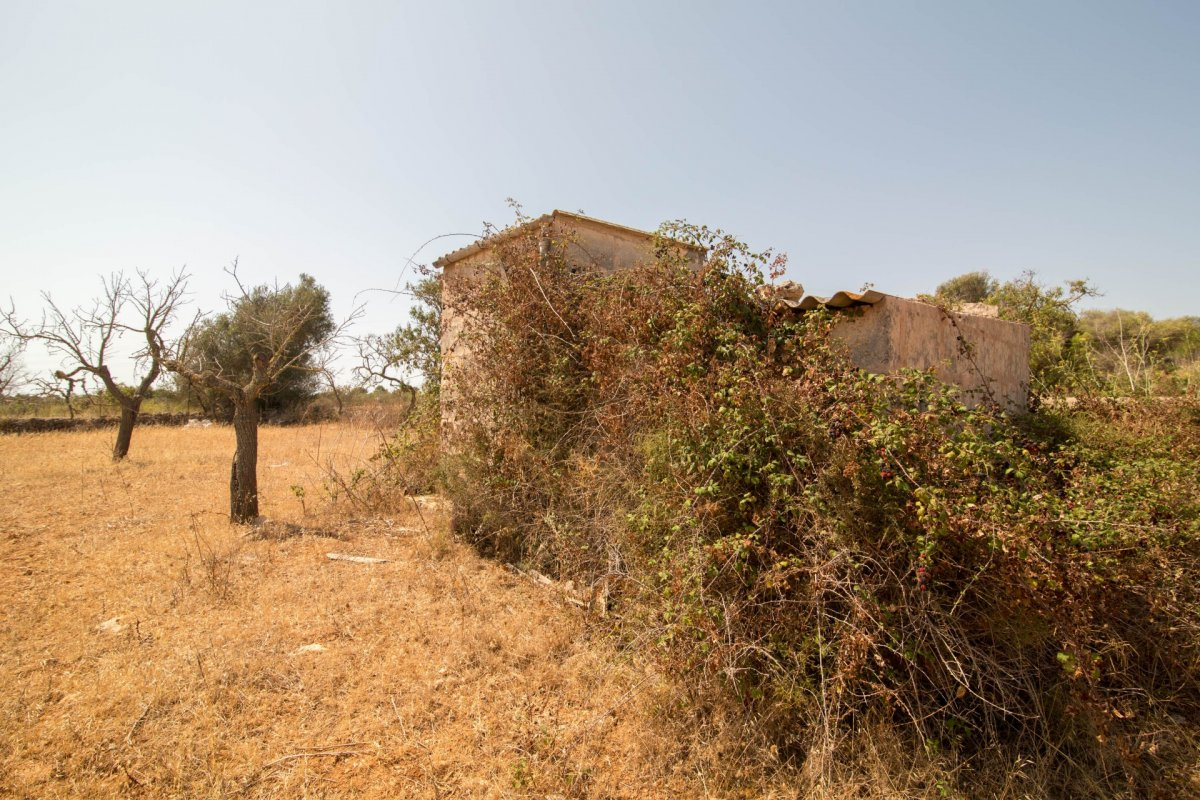 ES21421: Land for sale in San Lorenzo